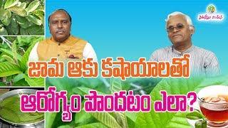 Guava (Jaamaku) Leaves kashayalu - Health Benefits    KhaderValli    Rythunestham
