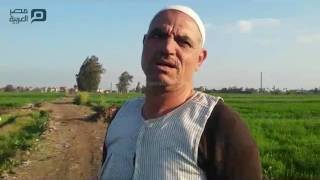 مصر العربية | الحمى القلاعية تحاصر قرى الغربية