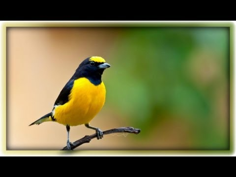 Amazing Natural Bird Sounds