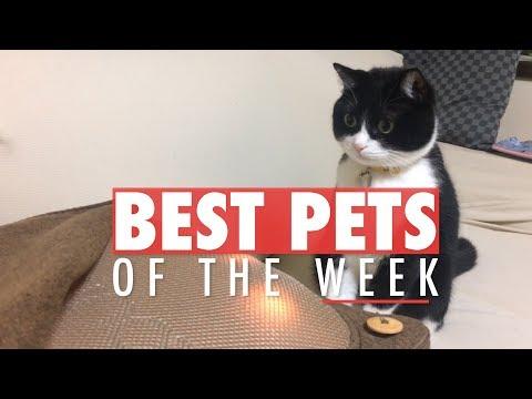 Best Pets of the Week | November 2017 Week 2