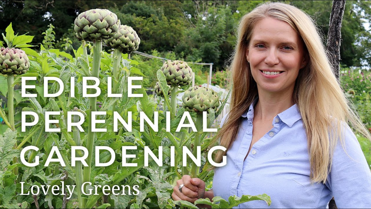 Edible Perennial Gardening Plant Once Harvest For Years Youtube
