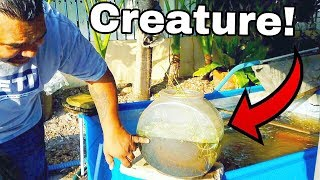 Tropical Creature LIVES in SMALL FISH BOWL!