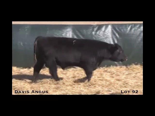 Davis Angus Lot 92
