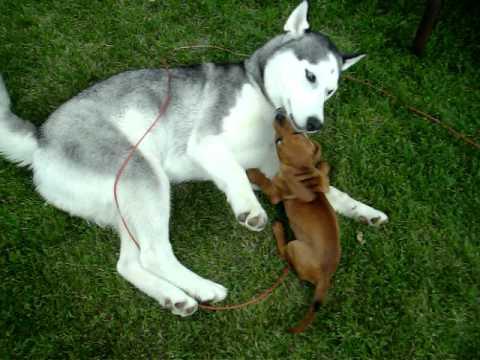 Dogs Like Wiener Dogs
