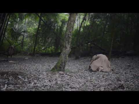 Linn da Quebrada - Tomara (Áudio-Vídeo Oficial)