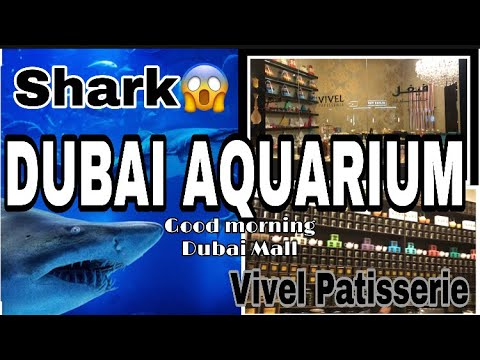 DUBAI AQUARIUM & UNDERWATER ZOO|VIVEL PATISSERIE|GOODMORNING DUBAI MALL
