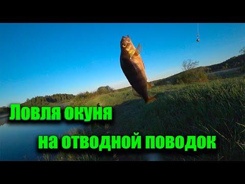 Ловля окуня на отводной поводок. Река Оредеж.