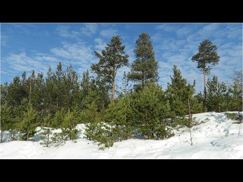 Природа зимой, красивое небо и облака, Amazing Winter Clouds