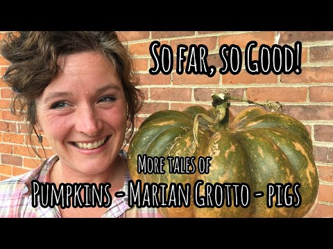 So Far, So Good! More Tales of Pumpkins, Marian Grotto & Kune Kune Pigs | Front Porch Catholic