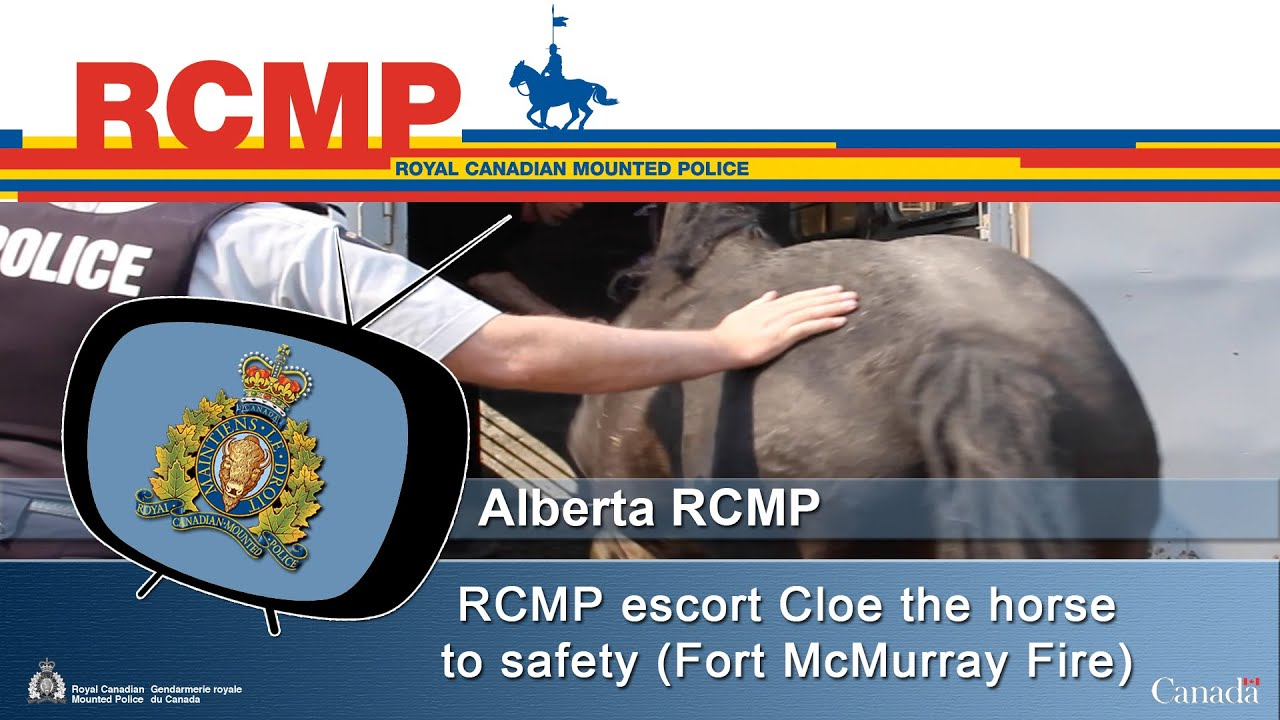 Escort Fort Mcmurray >> Rcmp Escort Cloe The Horse To Safety Fort Mcmurray Fire