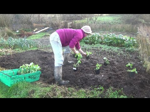 A Year In Our Vegetable Garden – December