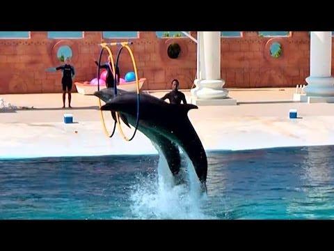 SEALANYA Dolphin show, Alanya, Turkey / Шоу дельфинов в морском парке SEALANYA