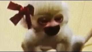 Petz: Crazy Monkeyz-Bri the monkey