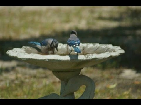 How To Clean Bird Bath Without Chemicals