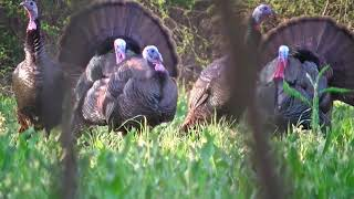 Epic Turkey Hunt To Start The 2021 Season!