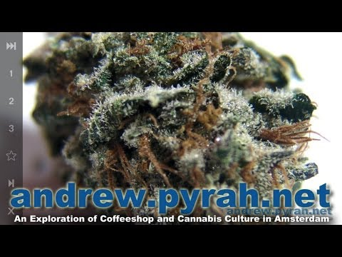 STRAWBERRY DIESEL - Het Filiaal (Hunters) Coffeeshop - Amsterdam Weed Review 2014