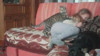 Злой кот нападает