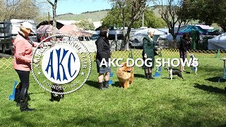 AKC dog shows combine the thrill of competition with the fun of see...