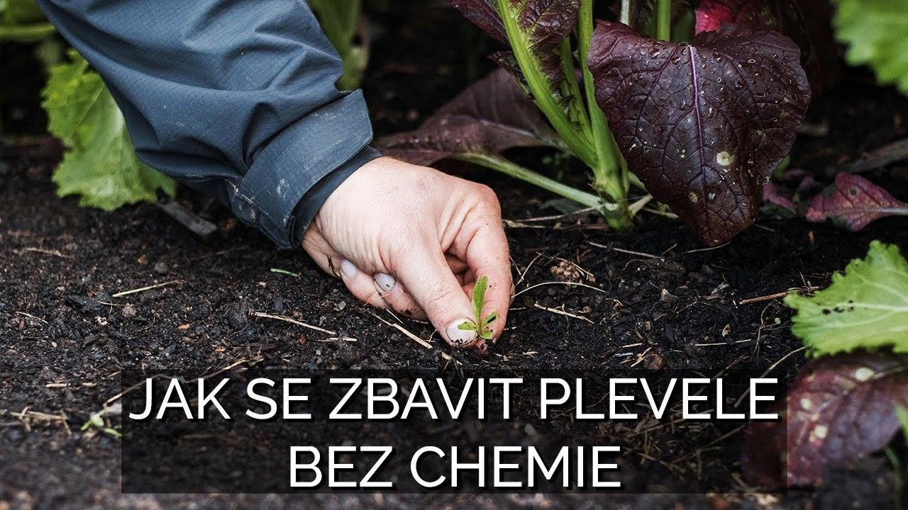 Download Jak se zbavit plevele bez chemie