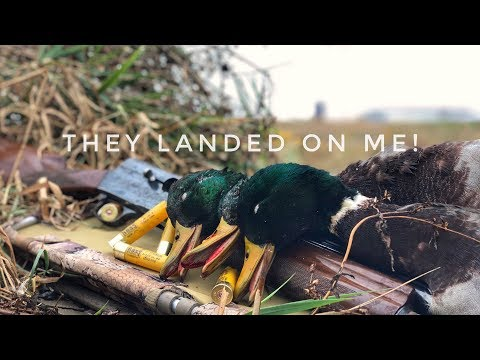 INSANE!! Solo Duck Hunt! - (Micro) Farm Pond Hunting Mallards!
