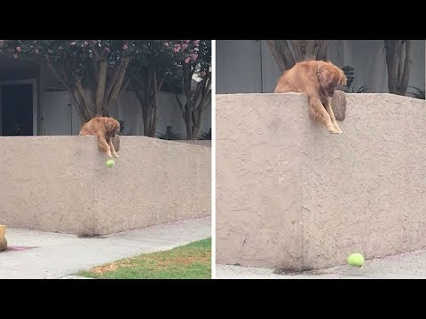 The Woody Show - This Dog Really Wants to Play Fetch with You