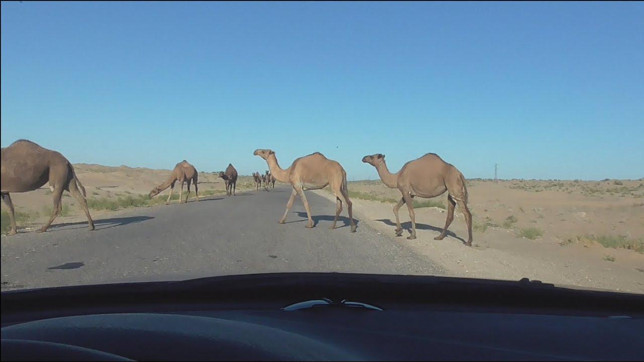 Туркменистан,Turkmenistan.По дороге в Хелес через Котур-Тепе.  База УСТГ .