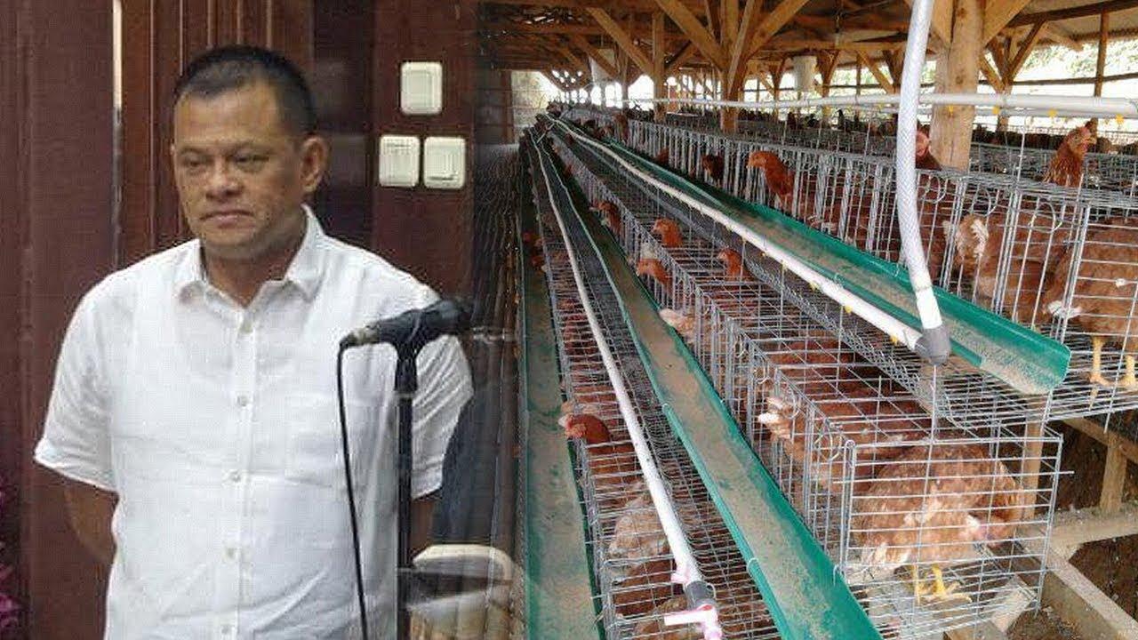 Download Kabar Baru Gatot Nurmantyo yang  Kini Sibuk Urus Ayam