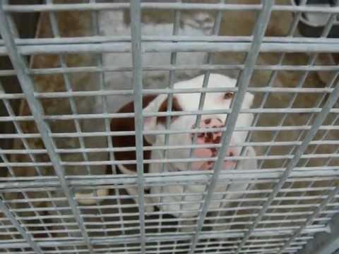 Shelter Hope Pet Shop.wmv