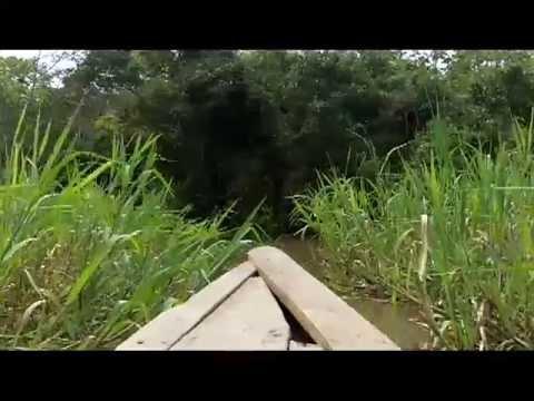 Amazon jungle Rio Yarapa Stock footage