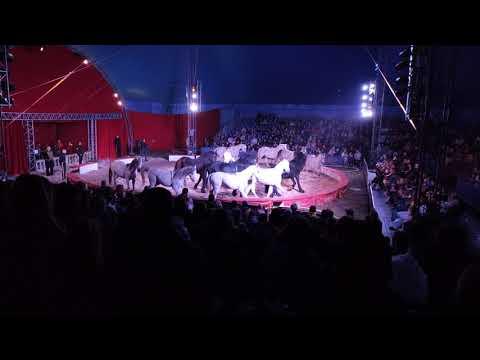 Richter Florian - show konne