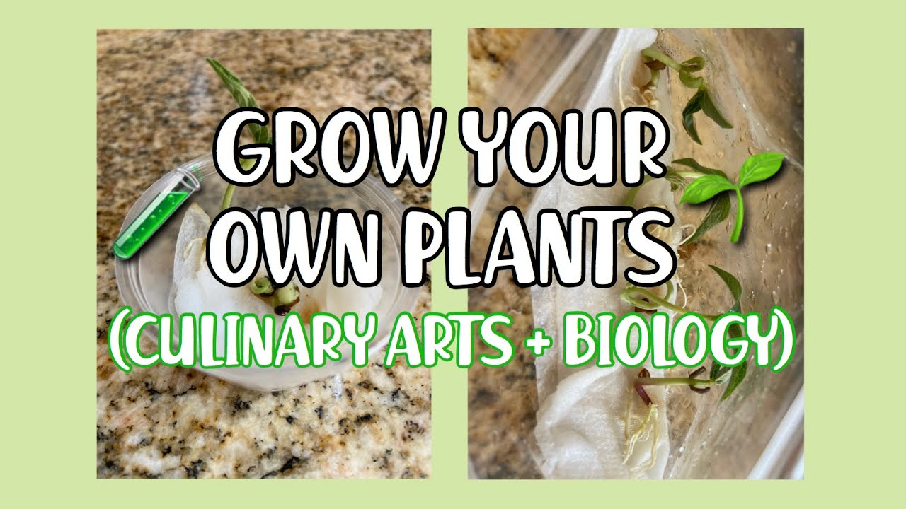 Grow Your Own Plants Tutorial