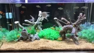 淡水魚 thumbnail