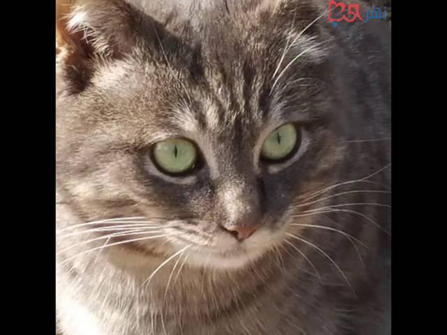 صوت القط مواء القط Youtube