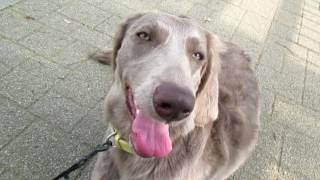 大阪城で犬と散歩するだけの動画.