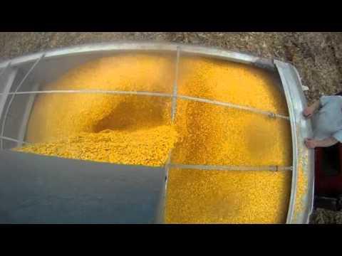 Corn Harvest Kinze 1050 Grain Cart Unloading into hopper bottom 10-25-2011
