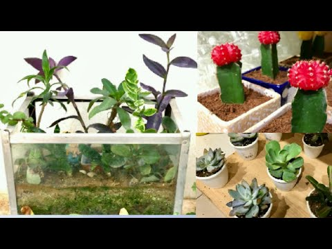 Top Six Plants To Grow In Aquarium Terrarium Convert Fish Tank Into