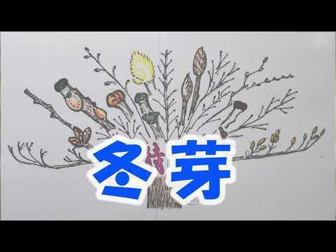 自然環境観察員 「冬芽の観察~春を待つ樹木~」