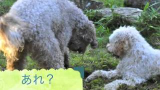 My doodles love to dig under the soft mossy ground.