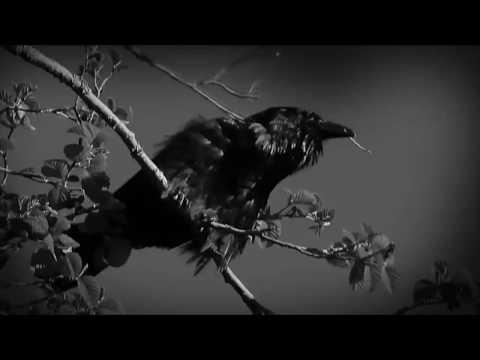 Американская История Ужасов 7  American Horror Story  CULT