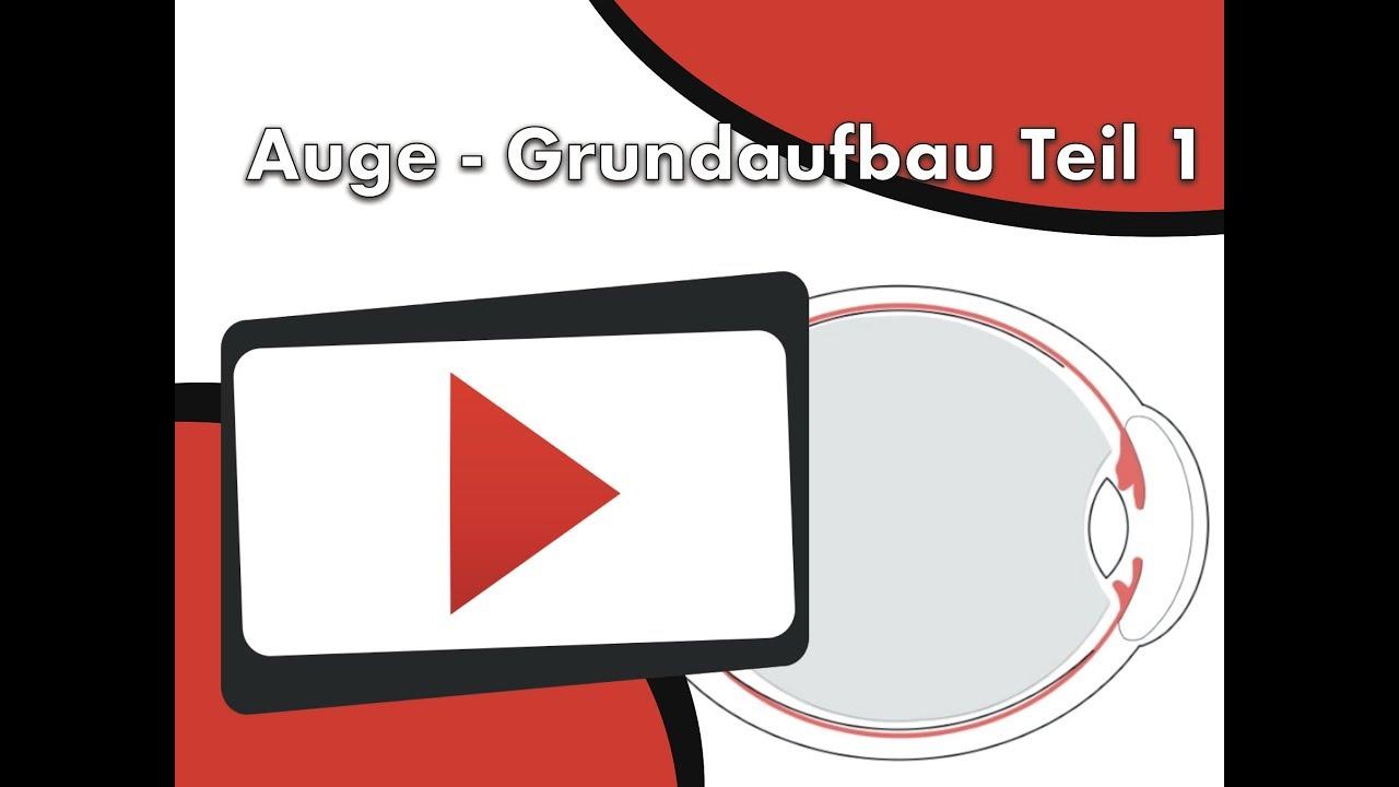 Auge - Grundaufbau Teil 1 - YouTube