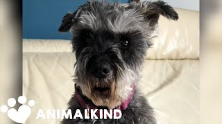 'Talking' dog dishes out social distancing advice | Animalkind