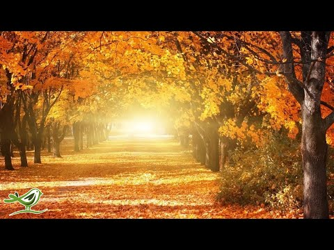 Beautiful Relaxing Music: Romantic Music, Piano Music, Violi