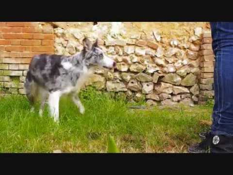Dog dancing by Lou : Amazing tricks