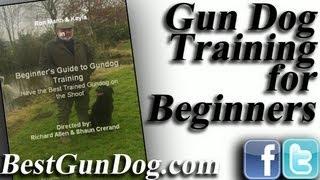 Gun Dog Training For The Beginner