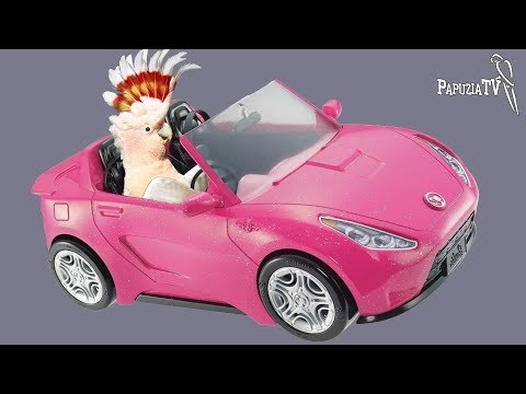 Transport Papug - Szalone Jazdy Z Papugami