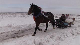 Зимняя свадьба в России — самое стильное торжество
