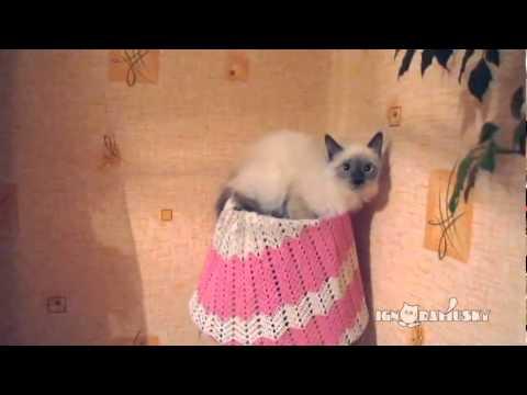 The lamp cat / Ламповая кошка