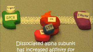 GPCR claymation