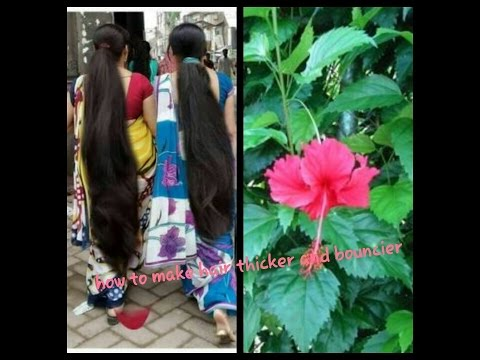 Hibiscus Leaves Hair Mask Makes Hair Thicker And Bouncier Youtube