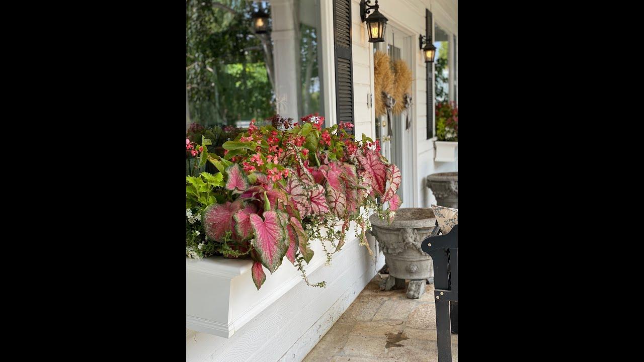 Colorful Window Box Planting! 🌸🌿